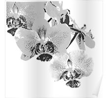 Homescape - grey and white orchid  Poster