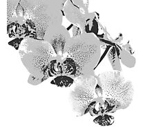 Homescape - grey and white orchid  Photographic Print