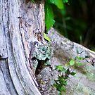 Hydrangea and Tree Trunk by eyeshoot