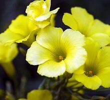 Sour Bouquet by monzastar