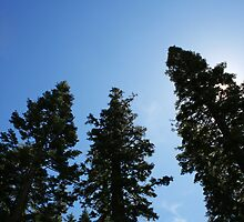 Reaching for the Sky by Rachel Patteson