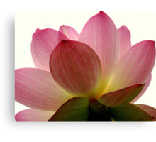 Beneath the Lotus Canvas Print