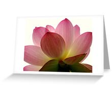 Beneath the Lotus Greeting Card