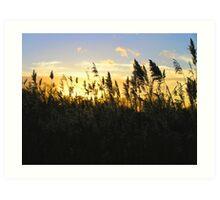 Reedbed Sunset Art Print