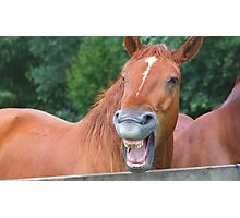 Horse humour........ Photographic Print