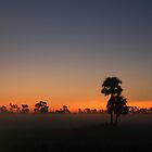 Cabbage Palm Sunrise by James Adams