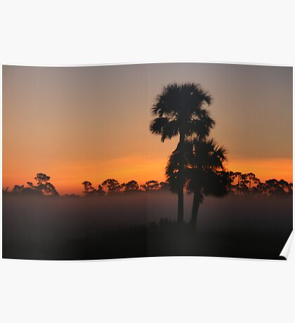 Cabbage Palm Sunrise II Poster