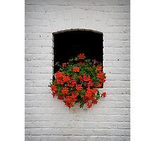 Window Geraniums Photographic Print