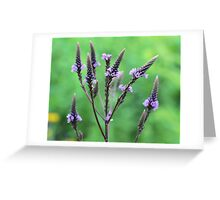 Lovely Vervain Greeting Card