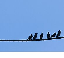 Birds on a Wire by Mary Ellen Tuite Photography