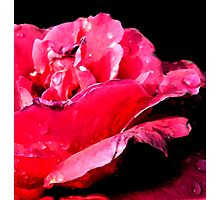 Dark Rose Photographic Print