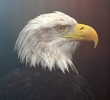 The Eagle in the Mist by Judy Yanke Fritzges