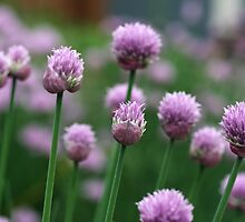 Chives by Kimberly Palmer