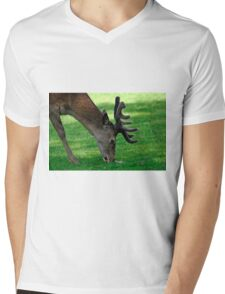 Male Red Deer Close-up  Mens V-Neck T-Shirt