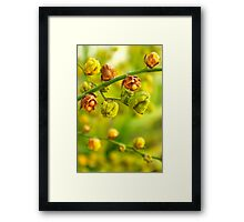 Foliage background Framed Print