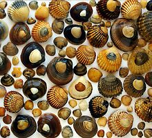 Shell Background by ccaetano