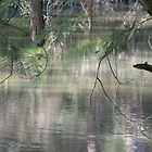 Spring Reflections by Pam Wilkie