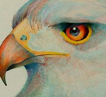 eagle eye by gerardo segismundo
