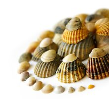 Shell Spiral by ccaetano