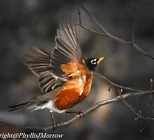 ROBIN IN FLIGHT by pjm286