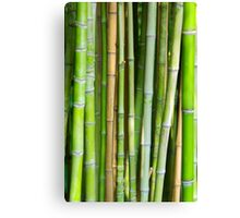 Bamboo Background Canvas Print