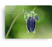Columbine Canvas Print