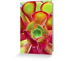 Aeonium colour Greeting Card
