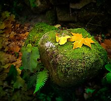 Leafs on Rock by ccaetano
