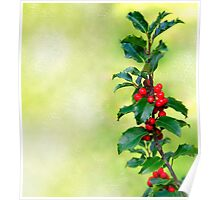 Holly Branch  Poster