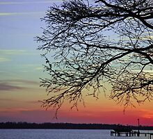 Sunset Branches by Angel Perry