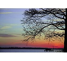 Sunset Branches Photographic Print