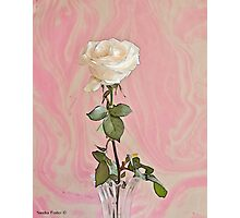 White Long Stemmed Rose Photographic Print