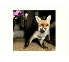 Paparazzi Snap Fox!  Art Print