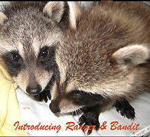 Introducing...Ranger & Bandit! by jansnow