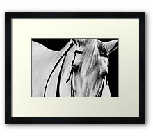 Gray Horse Art Portrait Framed Print