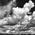 Corn and Clouds b&w by Jeff Harris