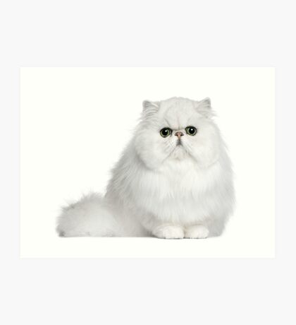 Persian Pussy (Phone Cases, Tablet Cases, Laptop Skins) Art Print