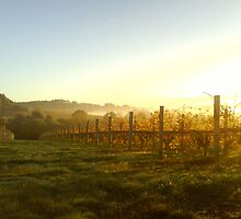 Misty Vineyard Dawn by David Lang