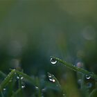 Morning Dew by Nathan v.D
