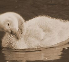 Cygnet In Sepia by AARDVARK