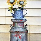 Winter Sunflowers by wiscbackroadz