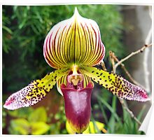 Purple and Yellow Orchid Poster