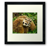 Meerkat #5 Framed Print