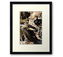 Courting Cormorants Framed Print