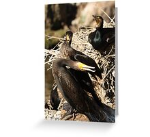 Courting Cormorants Greeting Card