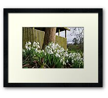 Snowdrops In Somerset Framed Print