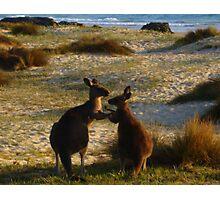 Kangaroos times two Photographic Print