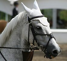 Grey Beauty by PrairieRose