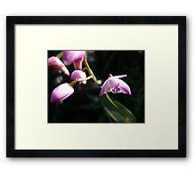 Orchid 1-1 Framed Print