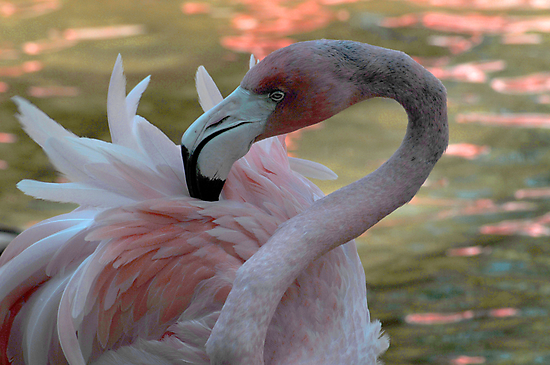 Portrait in Pink by Anne Smyth